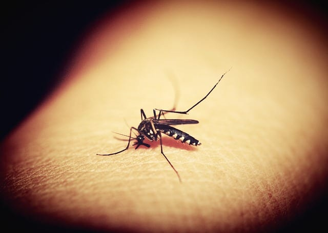 Mosquito biting human